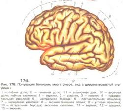 Устрій мозку